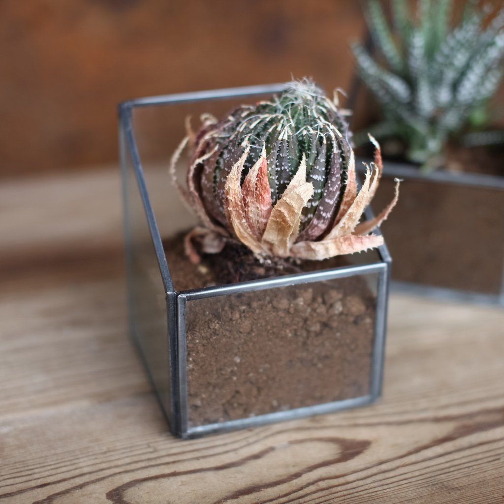 Zinc Planter - Small SAVE 30%