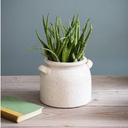 Ravello Crackle Glaze Pot