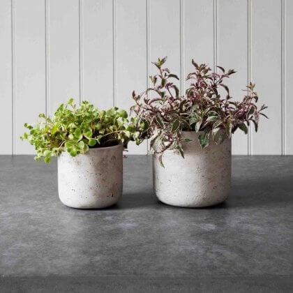 Cement Indoor Plant Pots
