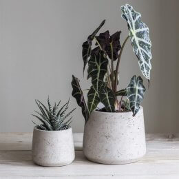 Stone Tapered Cement Plant Pots - Set of 2  save 25%