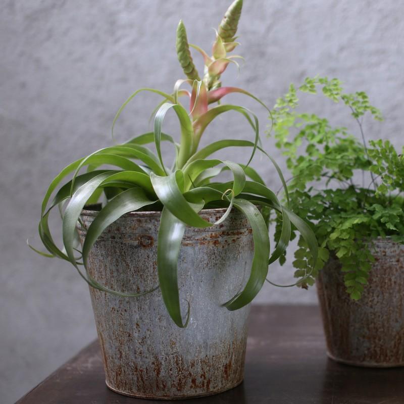 Plant Pot - Aged Zinc